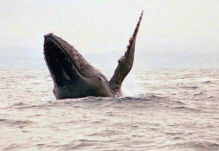 Winkender und lächelnder Wal