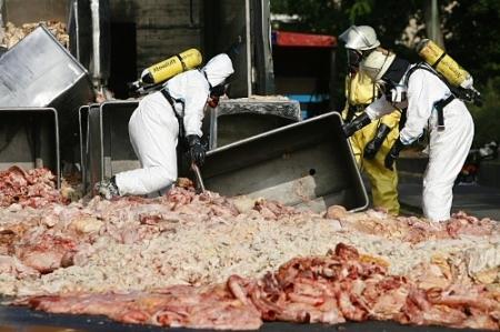 Gammelfleisch - Entsorgung unter Vollschutzmaßnahmen