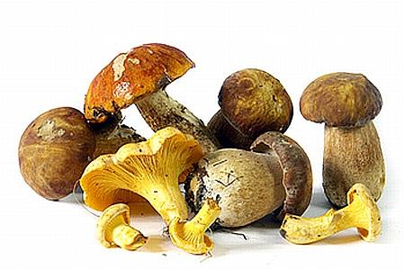 Pilze sammeln ist jetzt angeblich Diebstahl