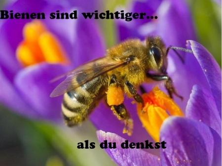 Ohne Bienen nicht nur kein Honig