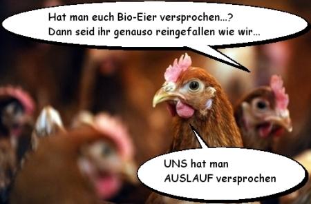 Nicht zu fassen - Staatsanwaltschaft stellt Ermittlungen gegen Eierproduzenten ein