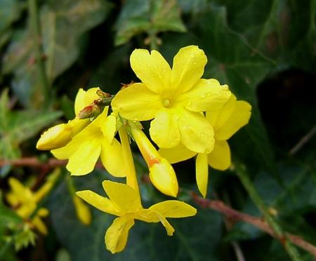 Klimaschwindel - Die Sache mit den Blüten im Winter