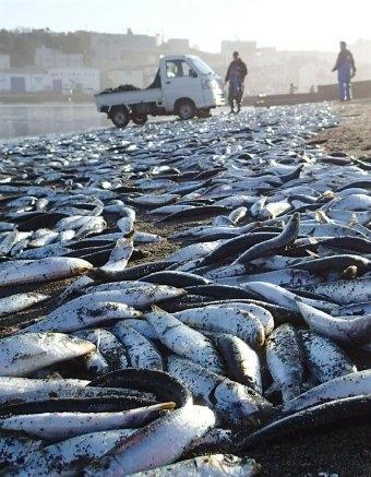 Mehr als 30 Belege für die radioaktive Belastung aus Fukushima....