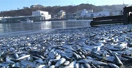 Mehr als 30 Belege für die radioaktive Belastung aus Fukushima